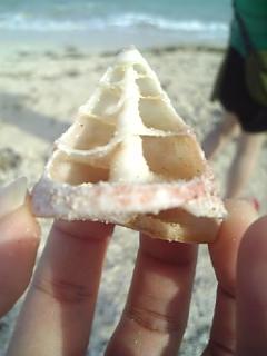 久米島貝殻